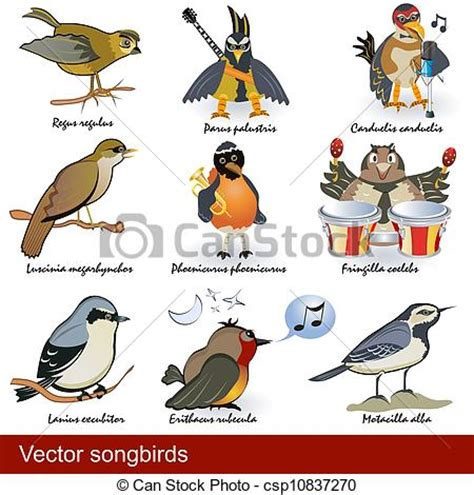 Vector, pájaros cantor. Bird., diferente, latín ...