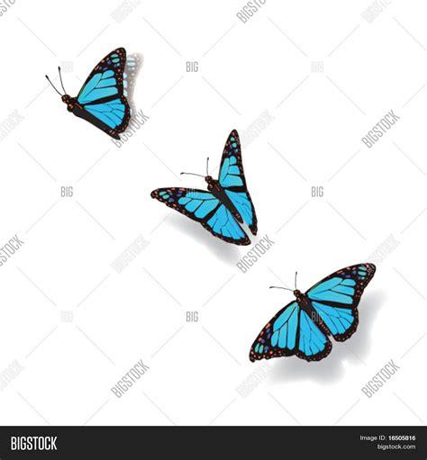 Vector y foto Mariposa En Movimiento | Bigstock