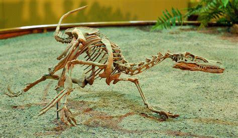 Velociraptor - Wikipedia, la enciclopedia libre