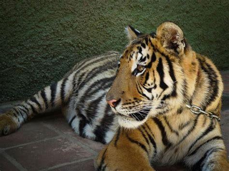 Ven con tu familia a conocer el Zoo de Castellar