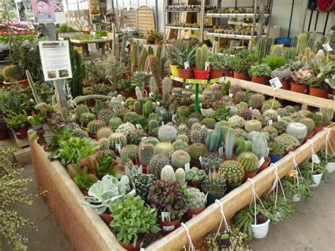 Venta de Cactus en Barcelona   Garden Center Catalunya ...