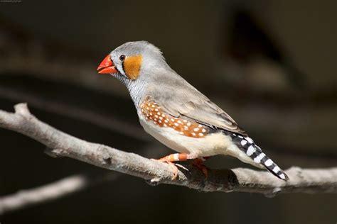 Venta de Canarios y otros Pájaros   Venta canarios por ...
