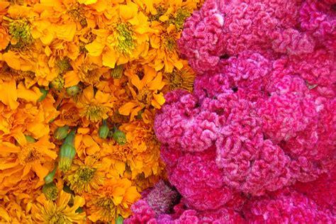 Venta de Flores para el Día de Muertos en Puebla  México ...