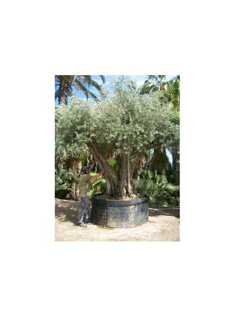 venta de oliveras online.
