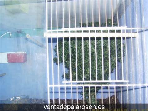 Venta de pajaros en Burgo Ranero , León   Venta De Pajaros