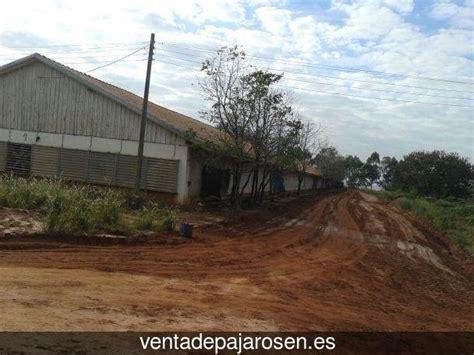 Venta de pajaros en Carracedelo , León   Venta De Pajaros