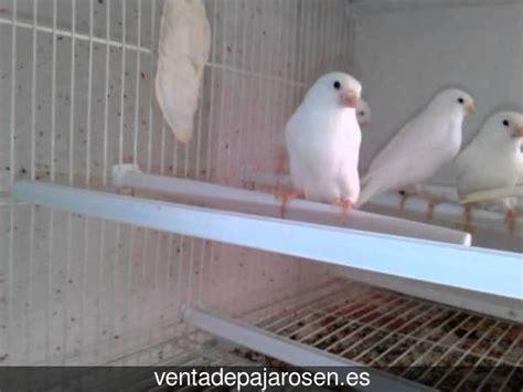 Venta de pajaros en Llamas de la Ribera , León   Venta De ...