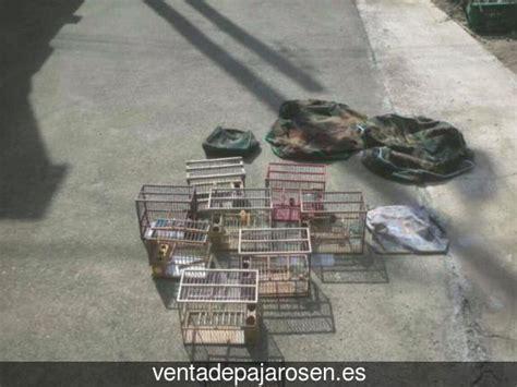 Venta de pajaros en Lodosa , Navarra   Venta De Pajaros