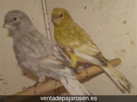 Venta de pajaros en Peranzanes , León   Venta De Pajaros