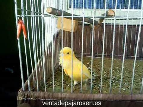 Venta de pajaros en Rivas Vaciamadrid , Madrid   Venta De ...