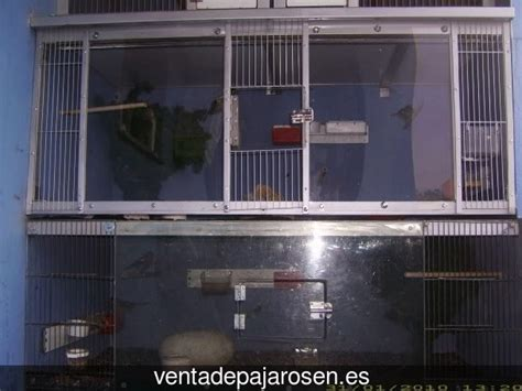 Venta de pajaros en Soutomaior , Pontevedra   Venta De Pajaros