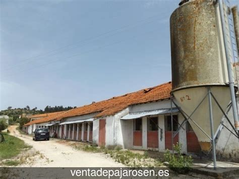 Venta de pajaros en Torreperogil , Jaén   Venta De Pajaros
