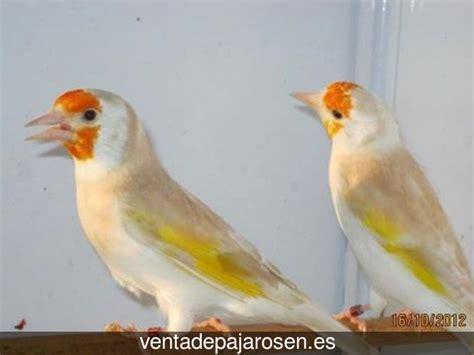 Venta de pajaros en Valdelugueros , León   Venta De Pajaros