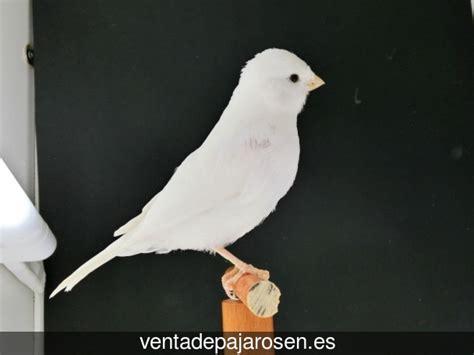 Venta de pajaros en Valdevimbre , León   Venta De Pajaros