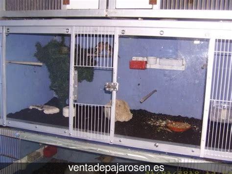 Venta de pajaros en Vilagarcía de Arousa , Pontevedra ...
