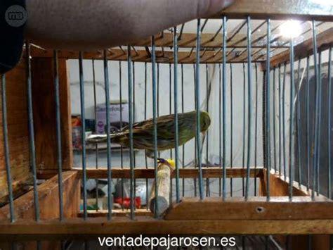 Venta de pajaros en Villadangos del Páramo , León   Venta ...