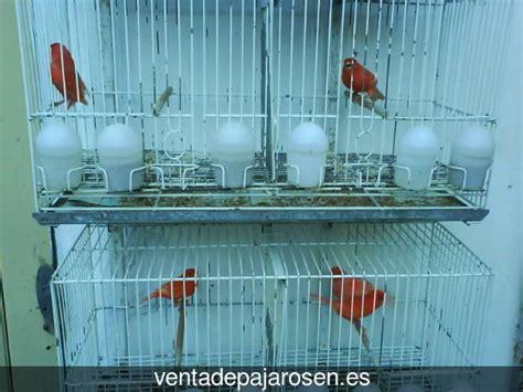 Venta de pajaros en Villamañán , León   Venta De Pajaros