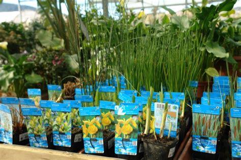 Venta de Plantas Acuáticas en Barcelona | Garden Center ...