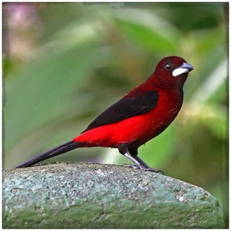 ver fotos de pájaros hermosos Archivos | Imagenes de Pajaros