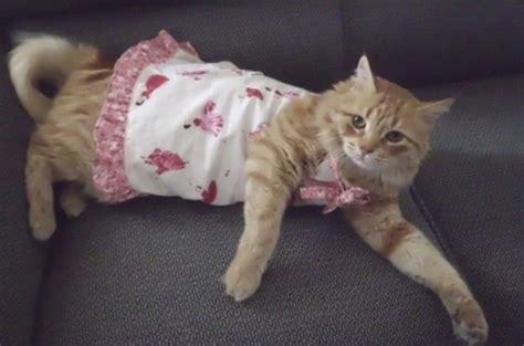 Vestido para Cães e Gatos   Ateliê Tatu Bolinha   Elo7
