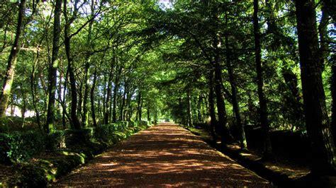 Viajes: Los ocho bosques más espectaculares del mundo ...