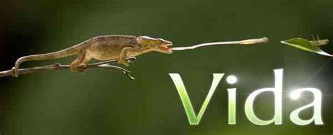 Vida | Descargar Documental Discovery Channel Vida TVRip ...