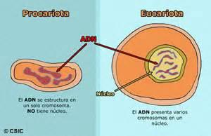 Vida en la Tierra. Procariotas y Eucariotas.