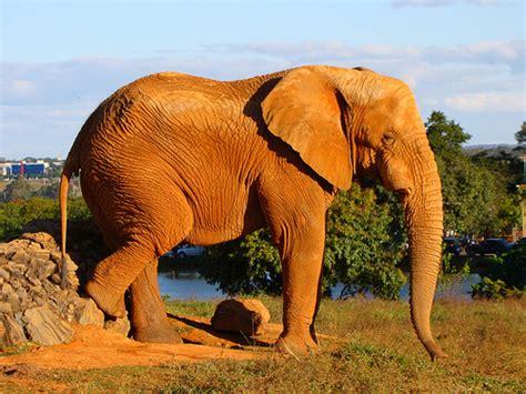 Vida Verde: 3 ANIMALES AFRICANOS EN PELIGRO DE EXTINCION.