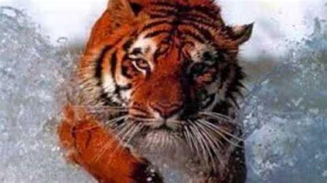 Video   Animales en peligro de extinción | Wiki ACAM ...