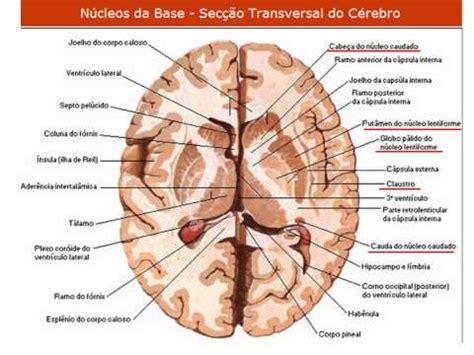Vídeo Aula 091 - Sistema Nervoso - Anatomia da Medula E ...