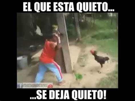 Video chistoso de gallinas y gallos   YouTube