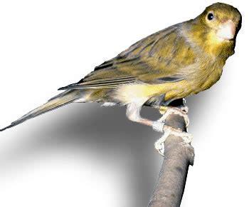 Vídeo de aves silvestres en España | Animales en Video