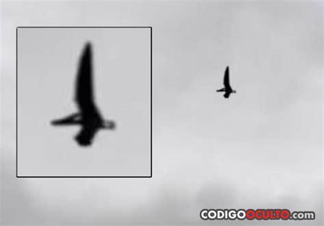 Vídeo: ¿Un 'pterodáctilo' sobrevolando Ohio? – Código Oculto