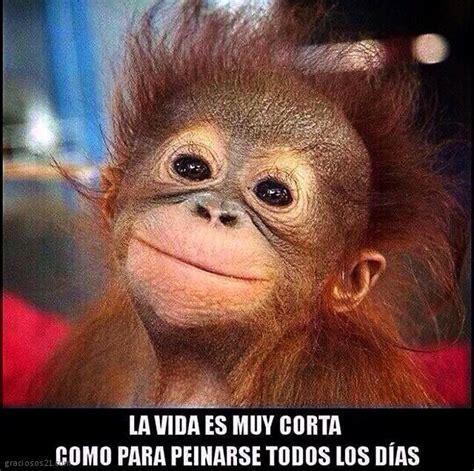 Vídeos, imágenes y fotos graciosos de Monos