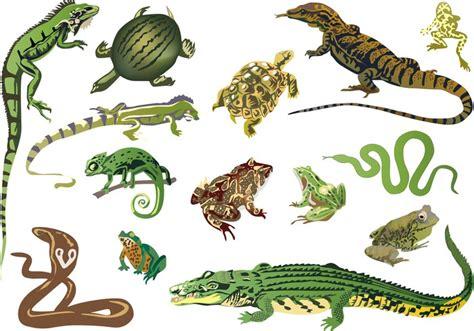 Vinilo Pixerstick Conjunto de reptiles y anfibios aislados ...