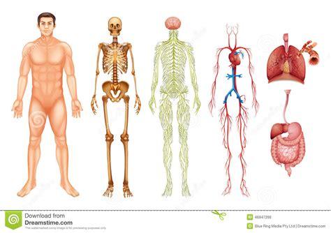 Visión integral del cuerpo humano y la interacción de sus ...