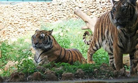 Visita al Zoo Castellar   Zoo Castellar | Groupon