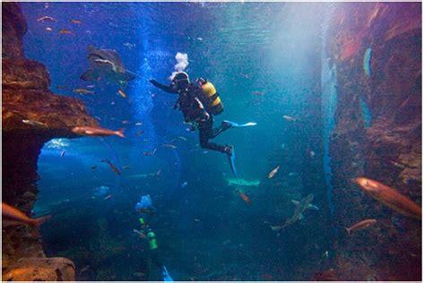 Visita el Aquarium de Donosti!