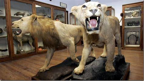 Visita el Museo de Ciencias Naturales de Madrid