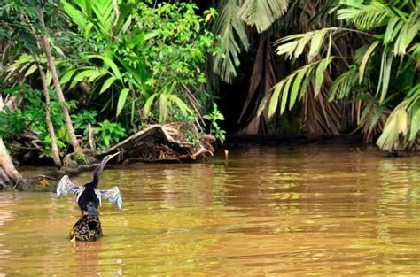 Visitar Tortuguero en Costa Rica por libre o tour ...