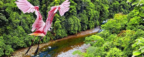 Visiter Costa Rica : Que voir, Que faire