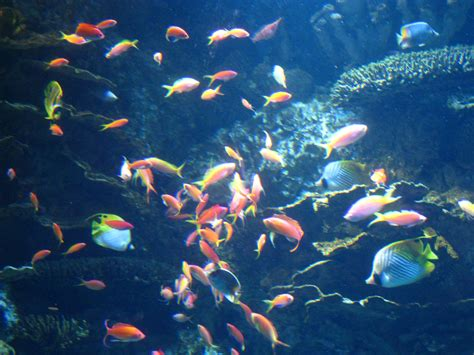 Visiting The Georgia Aquarium   Where is Yvette?