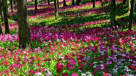 Visiting the world s most original botanical gardens   The ...