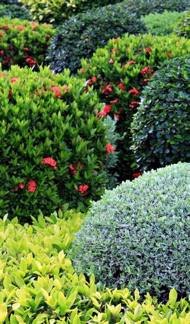 Vivero de arbustos ornamentales | Vivero Santa Barbara