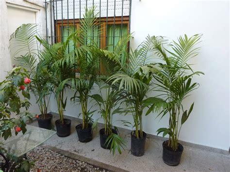 Vivero El Bambú :: Venta de Plantas y Macetas
