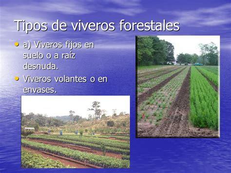 Viveros Forestales Generalidades.   ppt video online descargar