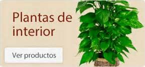 Viveros Shangai Madrid compra Plantas y flores de interior ...