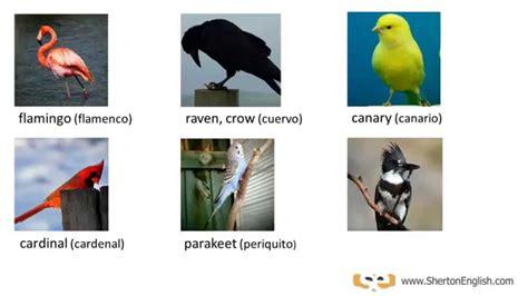 Vocabulario Inglés: Aves y Pájaros  Birds    YouTube