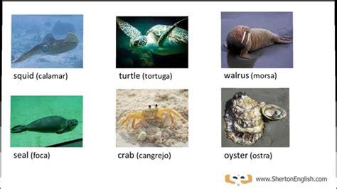 Vocabulario Inglés: Peces y Animales Acuáticos (Fish ...