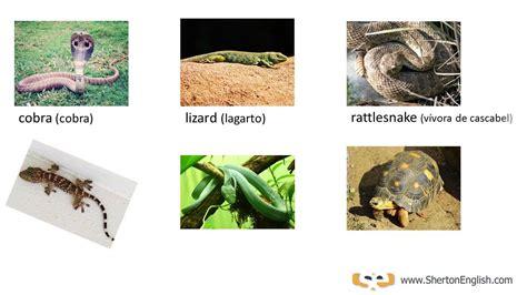 Vocabulario Inglés: Reptiles & Anfibios (Reptiles ...
